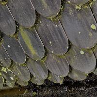 02-Dach-reinigen-Dachrinne-reinigen-durch-Laubfanggitter-verunreinigt