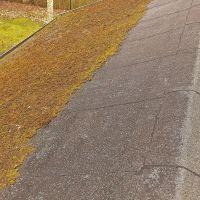 03-Dach-reinigen-Moos-beseitigen-in-Rostock-Dachpappe