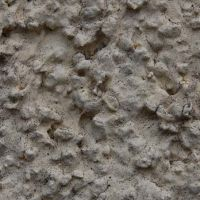02-fassade-rostock-algen-moos-befall-hausfassade-reinigen